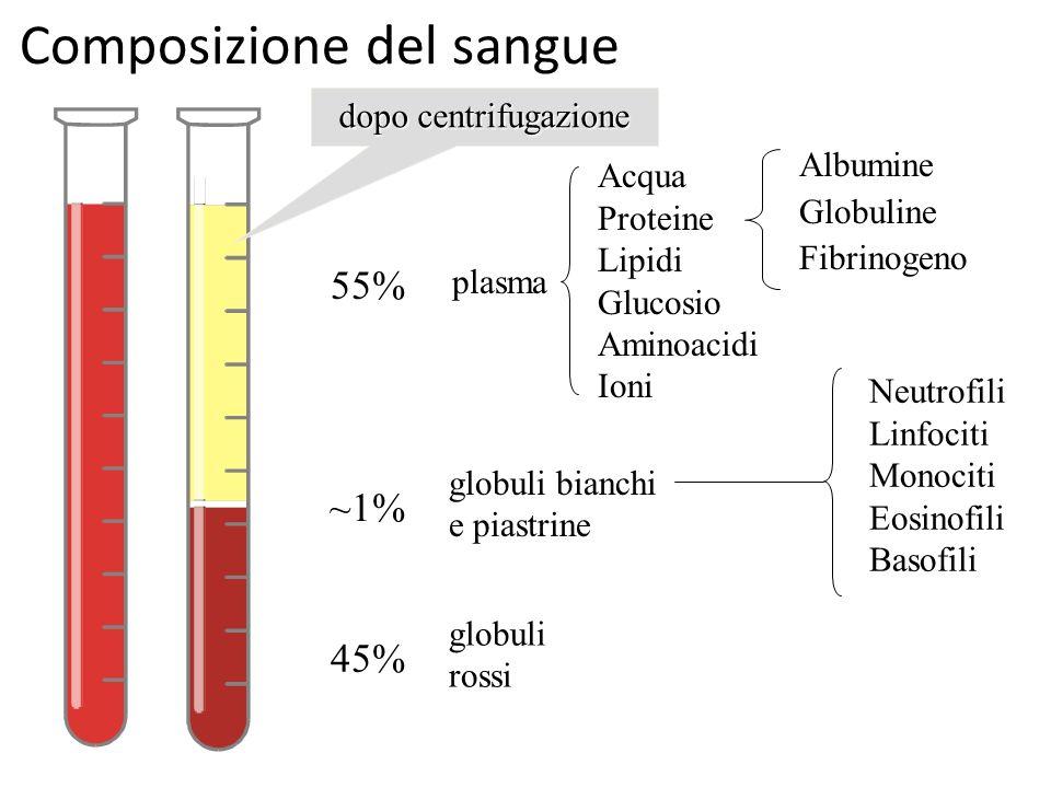 Composizione del sangue 45% 55% ~1% plasma globuli rossi globuli bianchi e piastrine Neutrofili Linfociti Monociti Eosinofili Basofili Acqua Proteine
