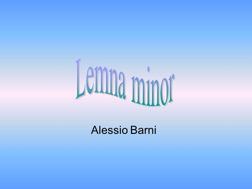 Alessio Barni