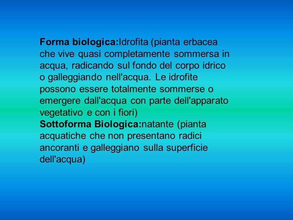 Forma biologica:Idrofita (pianta erbacea che vive quasi completamente sommersa in acqua, radicando sul fondo del corpo idrico o galleggiando nell'acqu