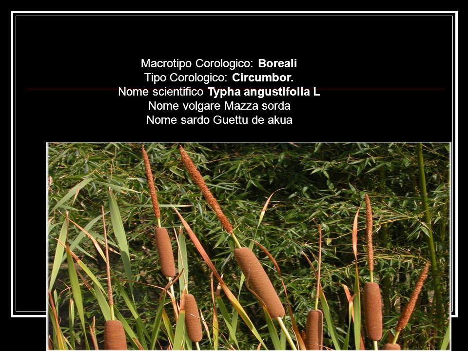 Macrotipo Corologico: Boreali Tipo Corologico: Circumbor.