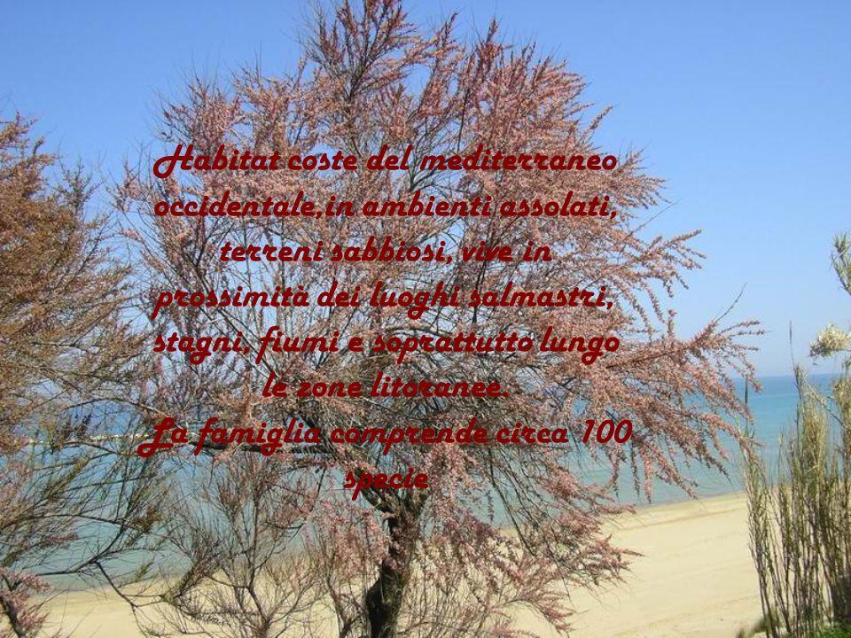 Habitat coste del mediterraneo occidentale,in ambienti assolati, terreni sabbiosi, vive in prossimità dei luoghi salmastri, stagni, fiumi e soprattutt