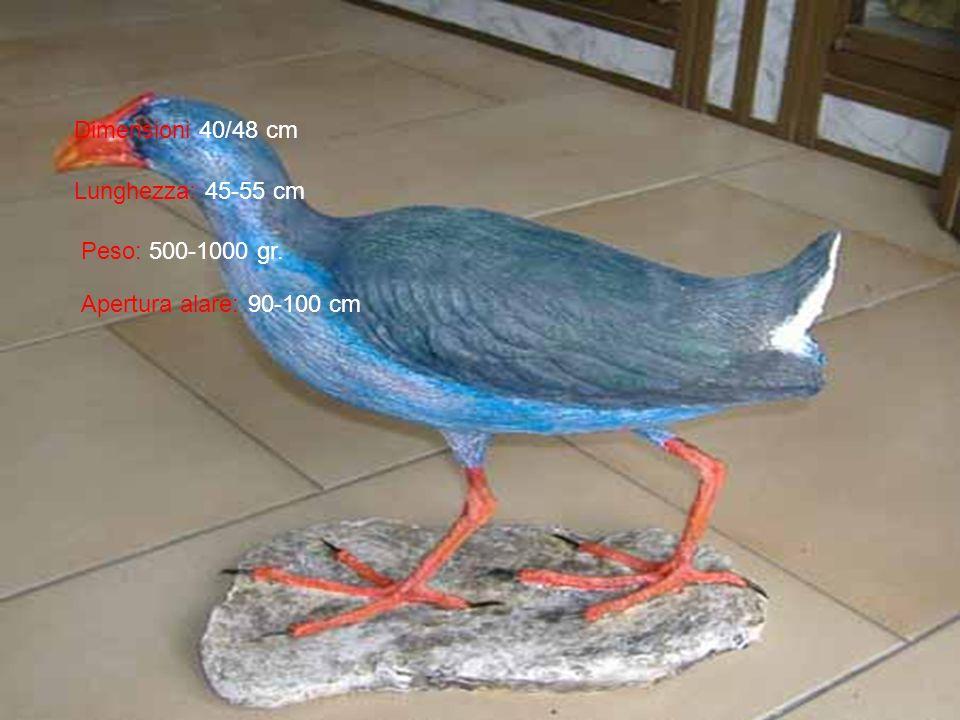 Dimensioni 40/48 cm Lunghezza: 45-55 cm Peso: 500-1000 gr. Apertura alare: 90-100 cm