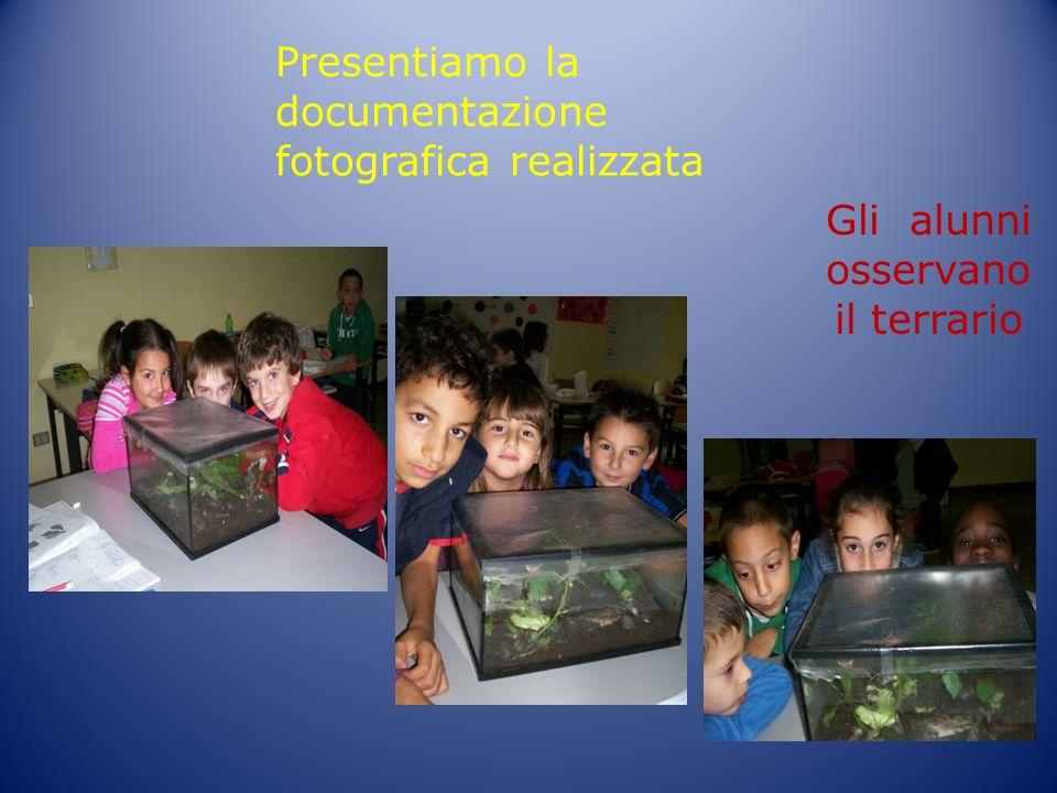 Presentiamo la documentazione fotografica realizzata Gli alunni osservano il terrario
