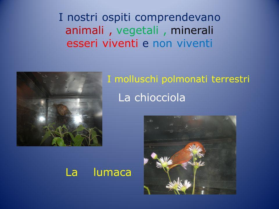 I nostri ospiti comprendevano animali, vegetali, minerali esseri viventi e non viventi La chiocciola La lumaca I molluschi polmonati terrestri