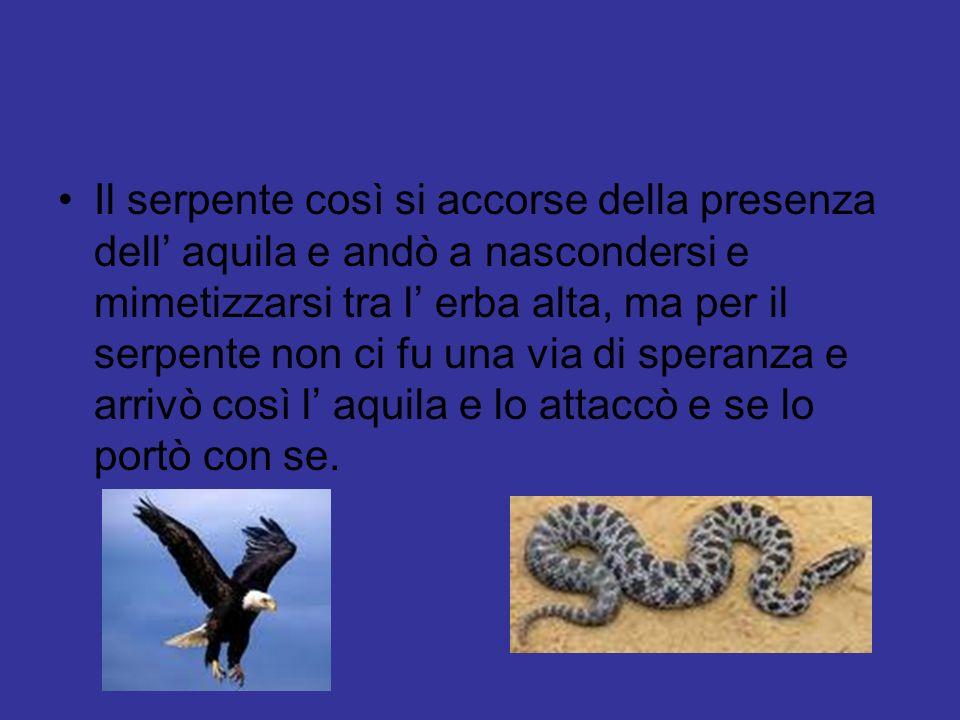 Il serpente così si accorse della presenza dell aquila e andò a nascondersi e mimetizzarsi tra l erba alta, ma per il serpente non ci fu una via di speranza e arrivò così l aquila e lo attaccò e se lo portò con se.