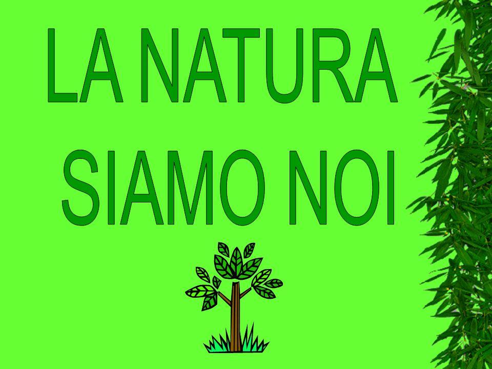 Al termine del progetto benessere intitolato La natura siamo noi, le tre classi seconde del plesso di Cazzago si sono cimentate nella pulizia di tre parchi pubblici: Rizzini, Arcobaleno, La Collina.