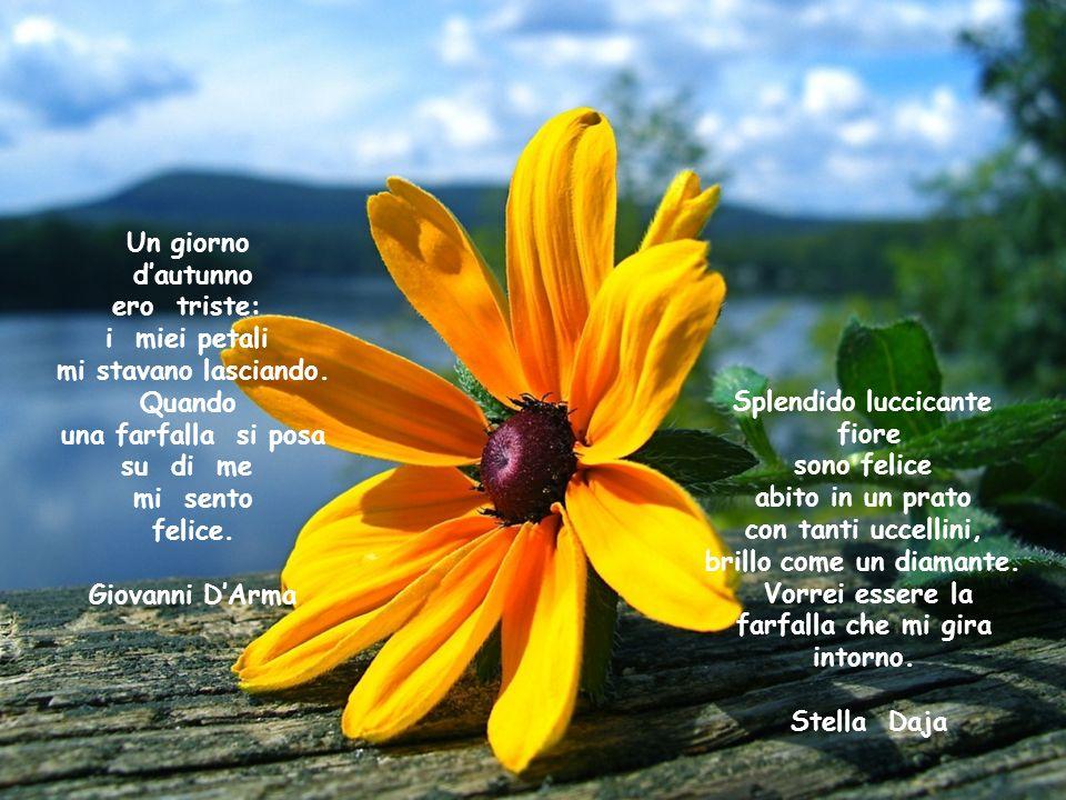 Splendido luccicante fiore sono felice abito in un prato con tanti uccellini, brillo come un diamante.
