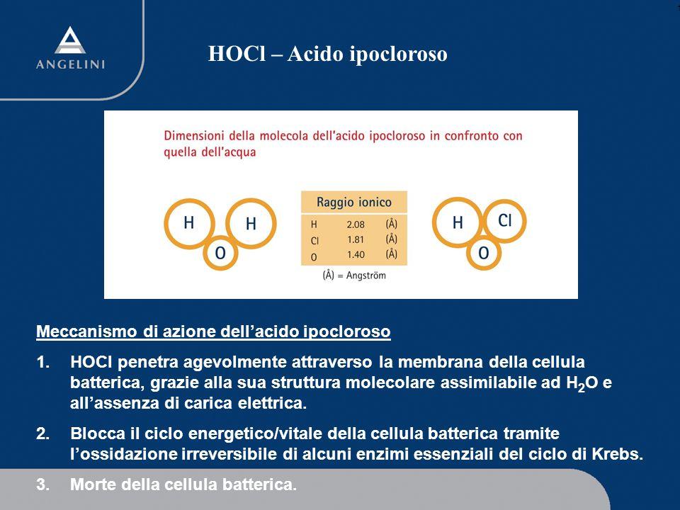 1 HOCl – Acido ipocloroso Meccanismo di azione dellacido ipocloroso 1.HOCl penetra agevolmente attraverso la membrana della cellula batterica, grazie