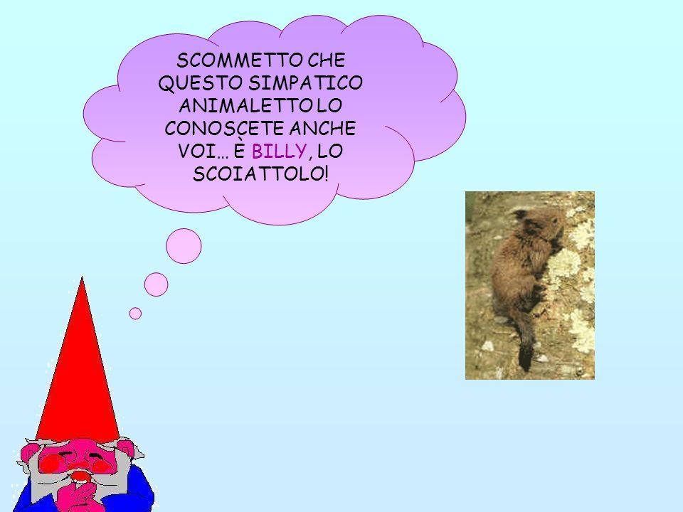 SCOMMETTO CHE QUESTO SIMPATICO ANIMALETTO LO CONOSCETE ANCHE VOI… È BILLY, LO SCOIATTOLO!