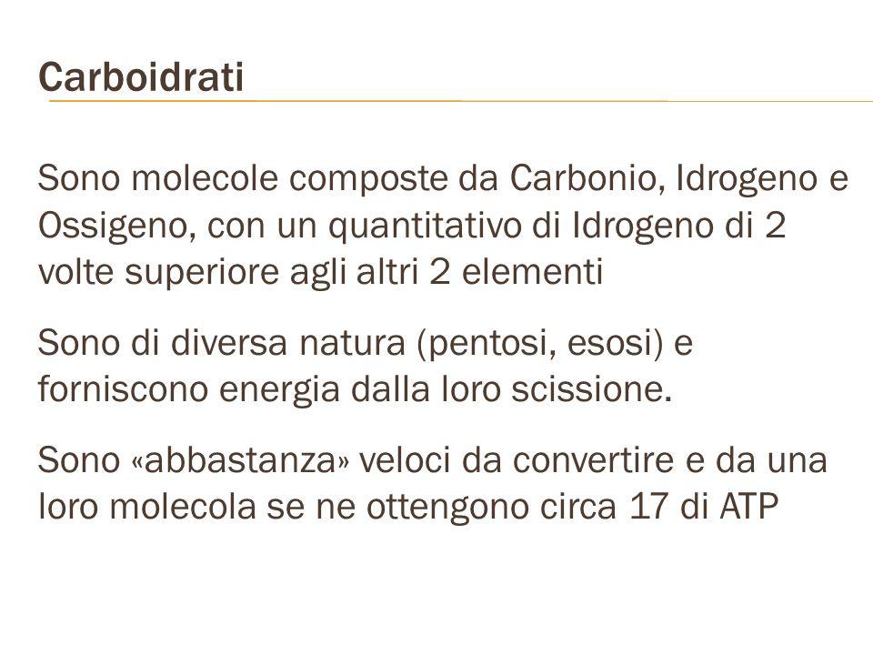 Carboidrati Sono molecole composte da Carbonio, Idrogeno e Ossigeno, con un quantitativo di Idrogeno di 2 volte superiore agli altri 2 elementi Sono d