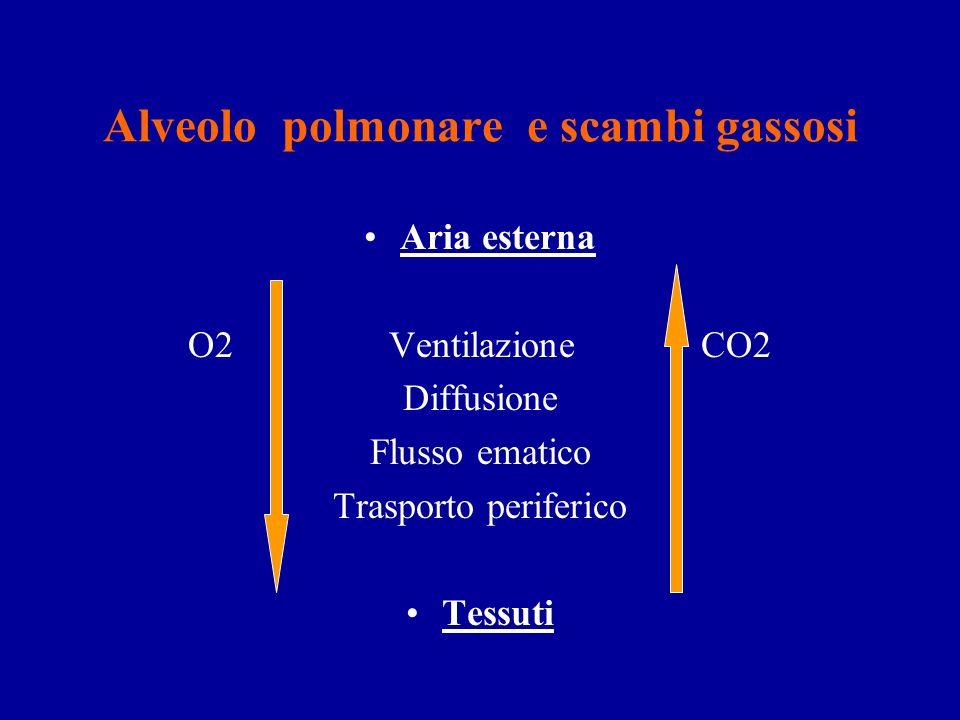SCAMBI RESPIRATORI I bronchi si dividono in bronchioli repiratori Questi si continuano con i dotti alveolari Che portano ai sacchi alveolari