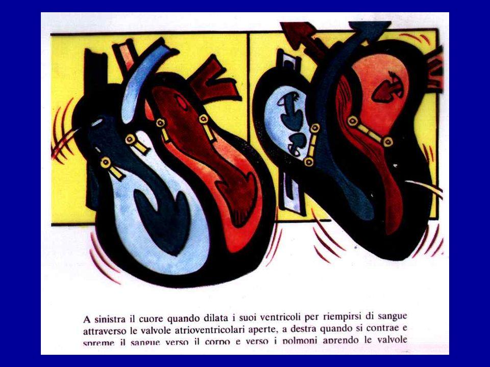 Alveolo polmonare e scambi gassosi Aria esterna O2 Ventilazione CO2 Diffusione Flusso ematico Trasporto periferico Tessuti