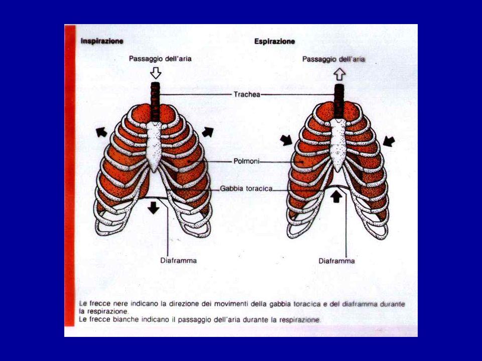 Iperestensione della testa Respirazione bocca a bocca e massaggio cardiaco 5 cm