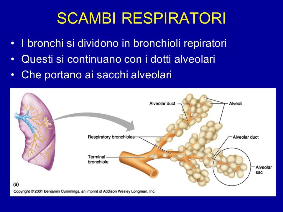 LAlbero Respiratorio Fig 23.7