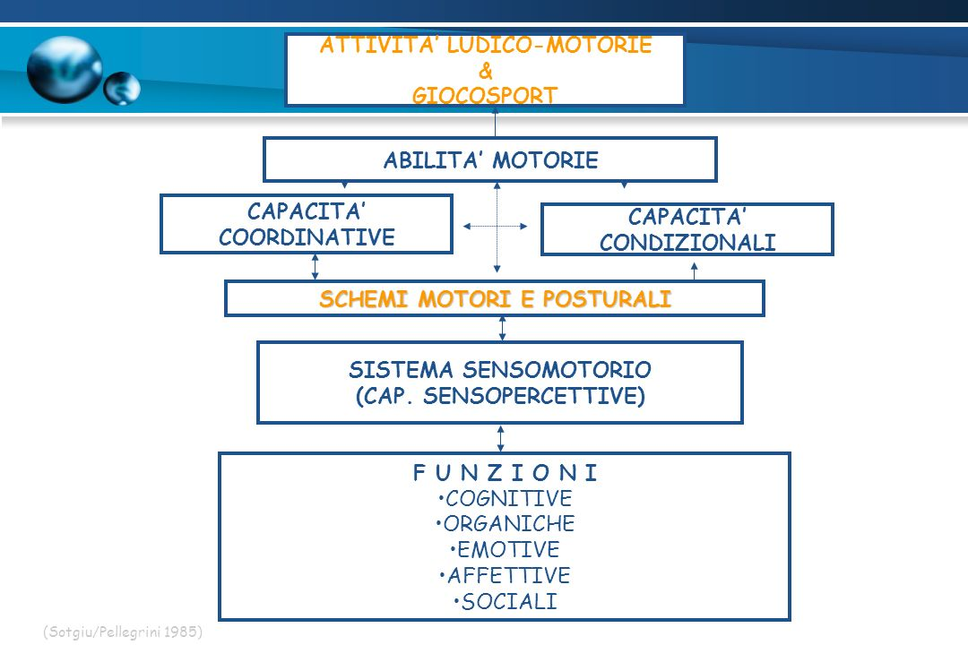 ATTIVITA LUDICO-MOTORIE & GIOCOSPORT ABILITA MOTORIE CAPACITA COORDINATIVE CAPACITA CONDIZIONALI SCHEMI MOTORI E POSTURALI SISTEMA SENSOMOTORIO (CAP.