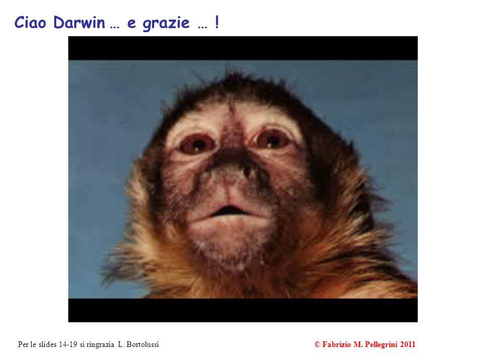 Ciao Darwin … e grazie … ! © Fabrizio M. Pellegrini 2011 Per le slides 14-19 si ringrazia L. Bortolussi