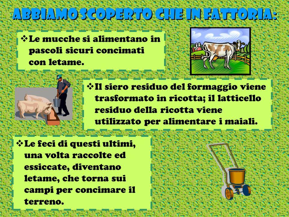 ABBIAMO SCOPERTO CHE IN FATTORIA: ABBIAMO SCOPERTO CHE IN FATTORIA: Le mucche si alimentano in pascoli sicuri concimati con letame. Il siero residuo d