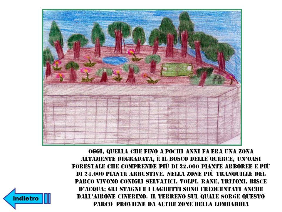 Oggi, quella che fino a pochi anni fa era una zona altamente degradata, è il Bosco delle Querce, unoasi forestale che comprende più di 22.000 piante arboree e più di 24.000 piante arbustive.