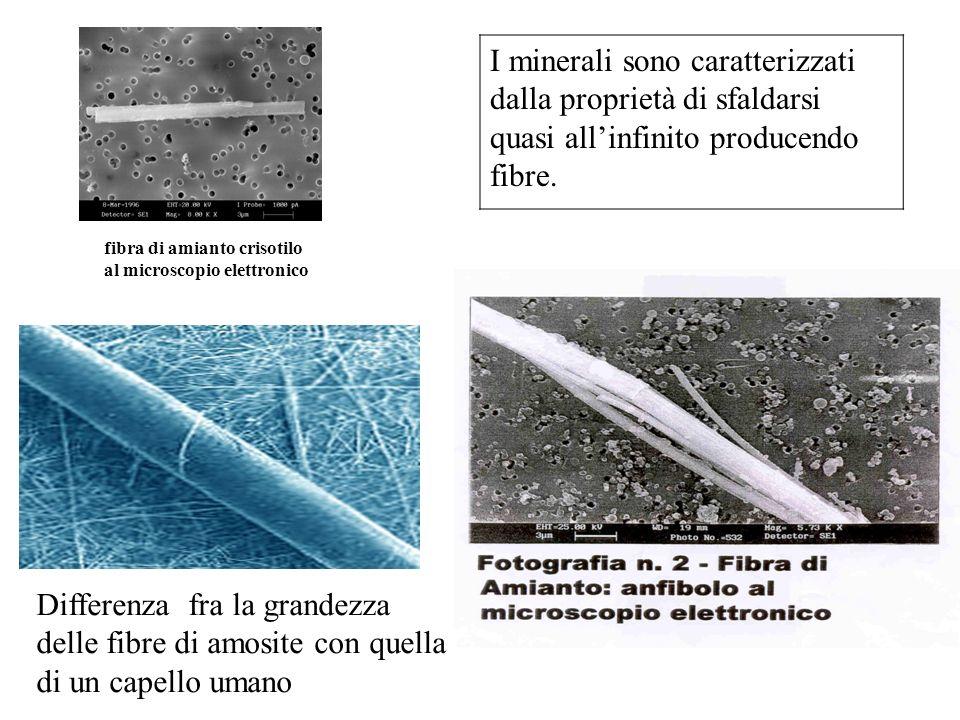 I minerali sono caratterizzati dalla proprietà di sfaldarsi quasi allinfinito producendo fibre. Differenza fra la grandezza delle fibre di amosite con