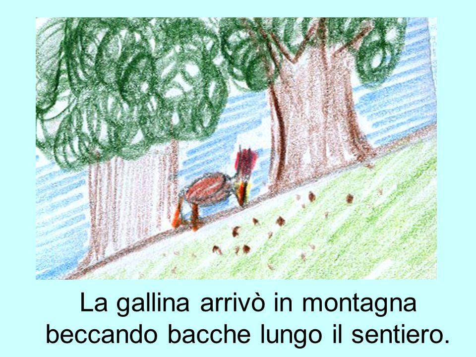 La gallina arrivò in montagna beccando bacche lungo il sentiero.