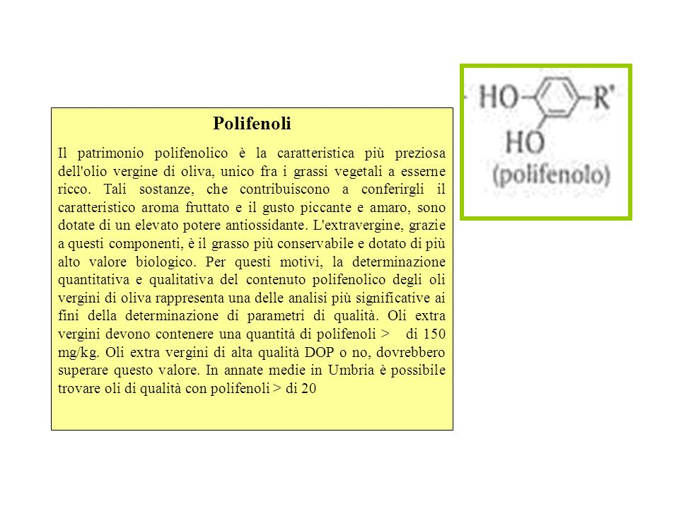 Polifenoli Il patrimonio polifenolico è la caratteristica più preziosa dell'olio vergine di oliva, unico fra i grassi vegetali a esserne ricco. Tali s
