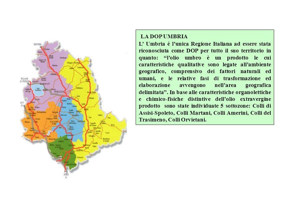 LA DOP UMBRIA L Umbria è lunica Regione Italiana ad essere stata riconosciuta come DOP per tutto il suo territorio in quanto: lolio umbro è un prodott