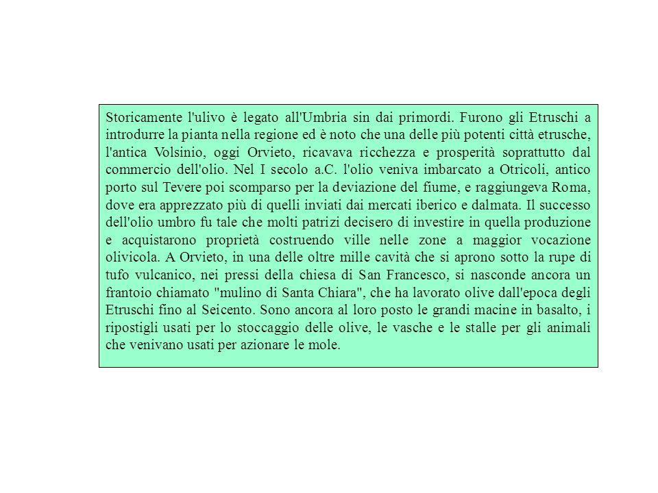 Storicamente l'ulivo è legato all'Umbria sin dai primordi. Furono gli Etruschi a introdurre la pianta nella regione ed è noto che una delle più potent