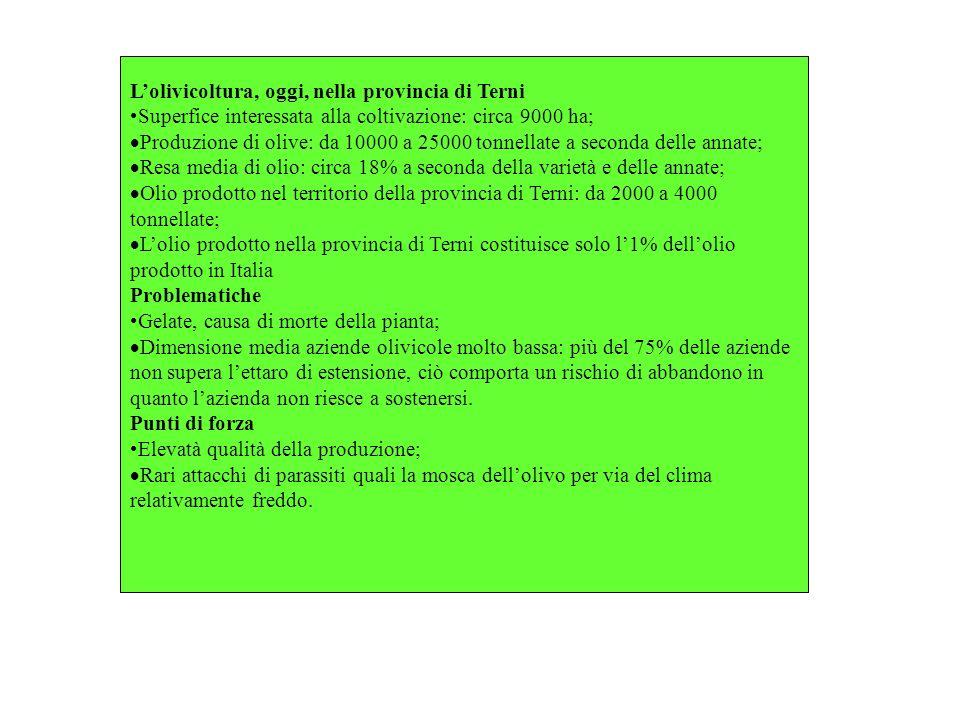 Lolivicoltura, oggi, nella provincia di Terni Superfice interessata alla coltivazione: circa 9000 ha; Produzione di olive: da 10000 a 25000 tonnellate