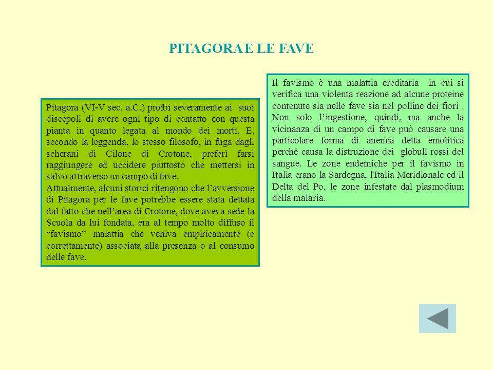 PITAGORA E LE FAVE Pitagora (VI-V sec.