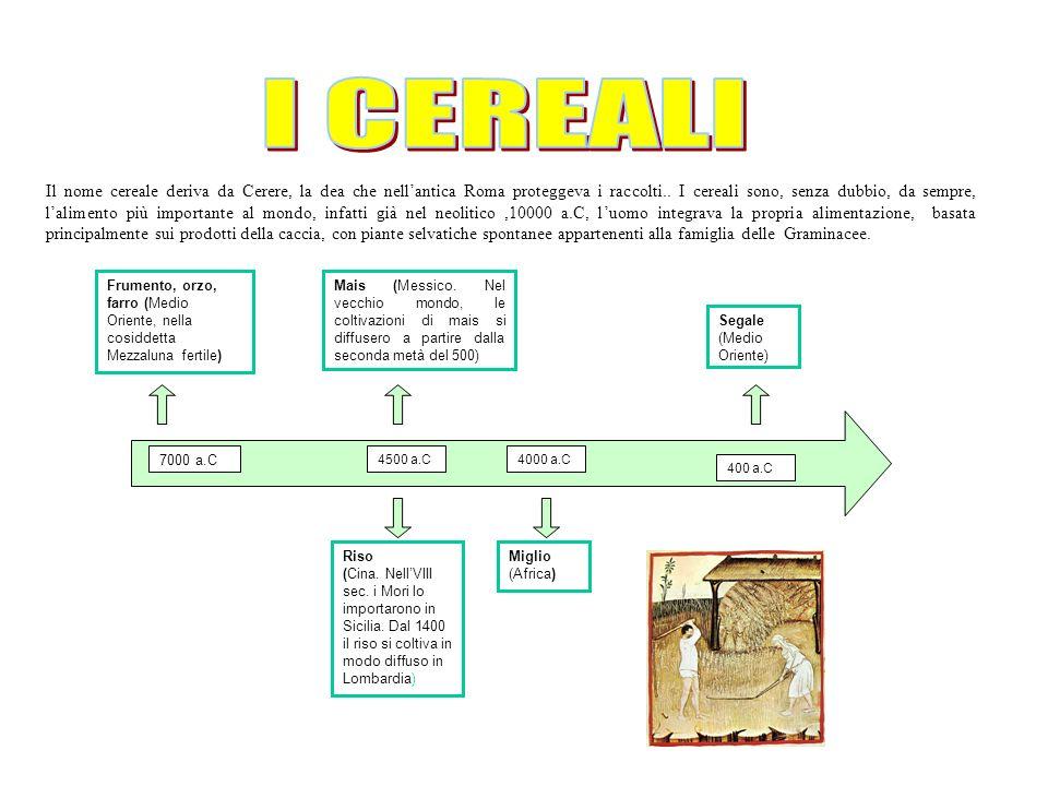 Il nome cereale deriva da Cerere, la dea che nellantica Roma proteggeva i raccolti..
