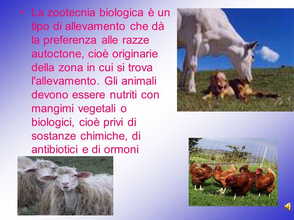 La zootecnia biologica è un tipo di allevamento che dà la preferenza alle razze autoctone, cioè originarie della zona in cui si trova l'allevamento. G