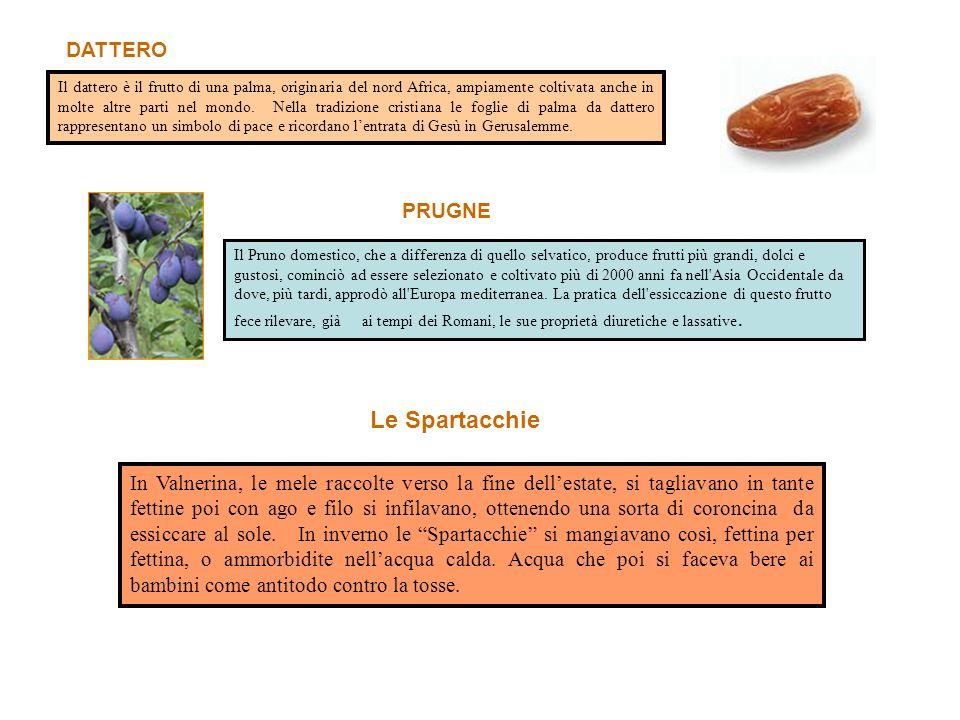 Il dattero è il frutto di una palma, originaria del nord Africa, ampiamente coltivata anche in molte altre parti nel mondo.