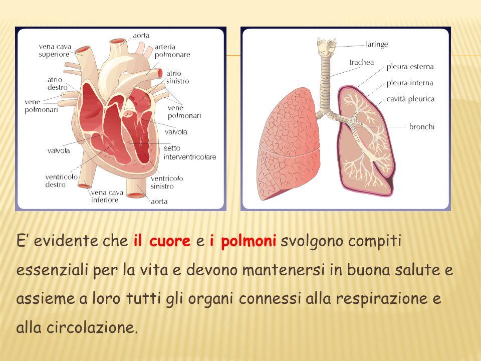 E evidente che il cuore e i polmoni svolgono compiti essenziali per la vita e devono mantenersi in buona salute e assieme a loro tutti gli organi conn