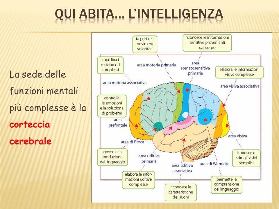 La sede delle funzioni mentali più complesse è la corteccia cerebrale