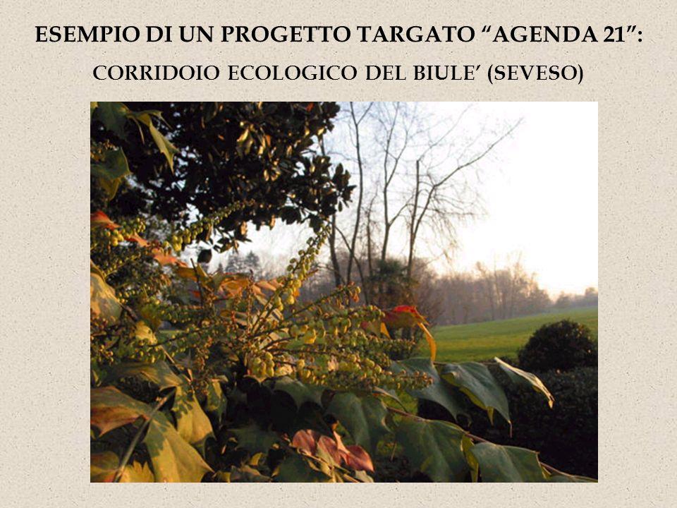 ESEMPIO DI UN PROGETTO TARGATO AGENDA 21: CORRIDOIO ECOLOGICO DEL BIULE (SEVESO)