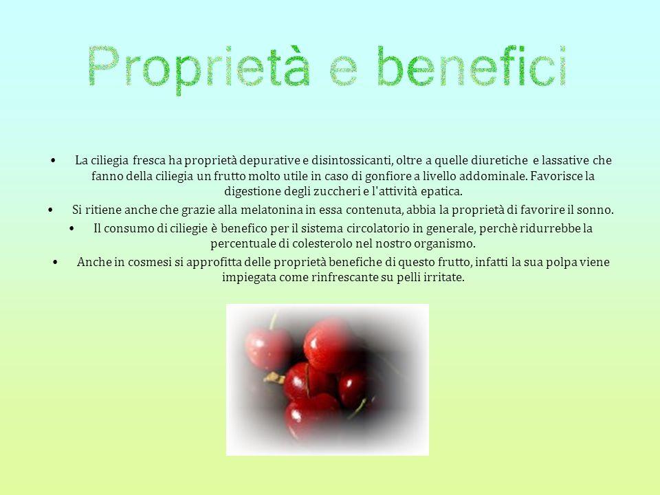 La ciliegia fresca ha proprietà depurative e disintossicanti, oltre a quelle diuretiche e lassative che fanno della ciliegia un frutto molto utile in caso di gonfiore a livello addominale.