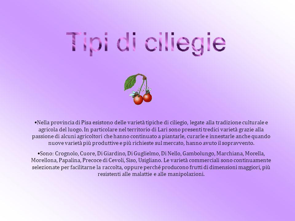 Dalle ciliegie si possono ottenere confetture, marmellate, liquori, sciroppi, succhi, canditi, sorbetti........da utilizzare sia così che come ingredienti di ricette più elaborate.