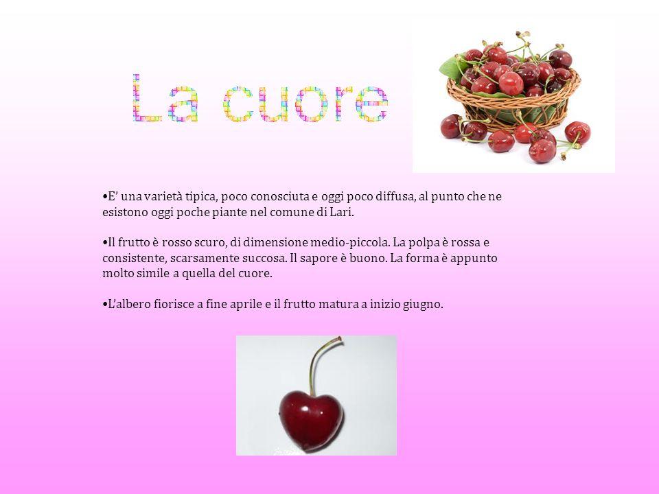 A Lari si hanno notizie della ciliegia nel 500 e 600 ma è soprattutto nel 700 che la frutticoltura riprende la sua crescita.