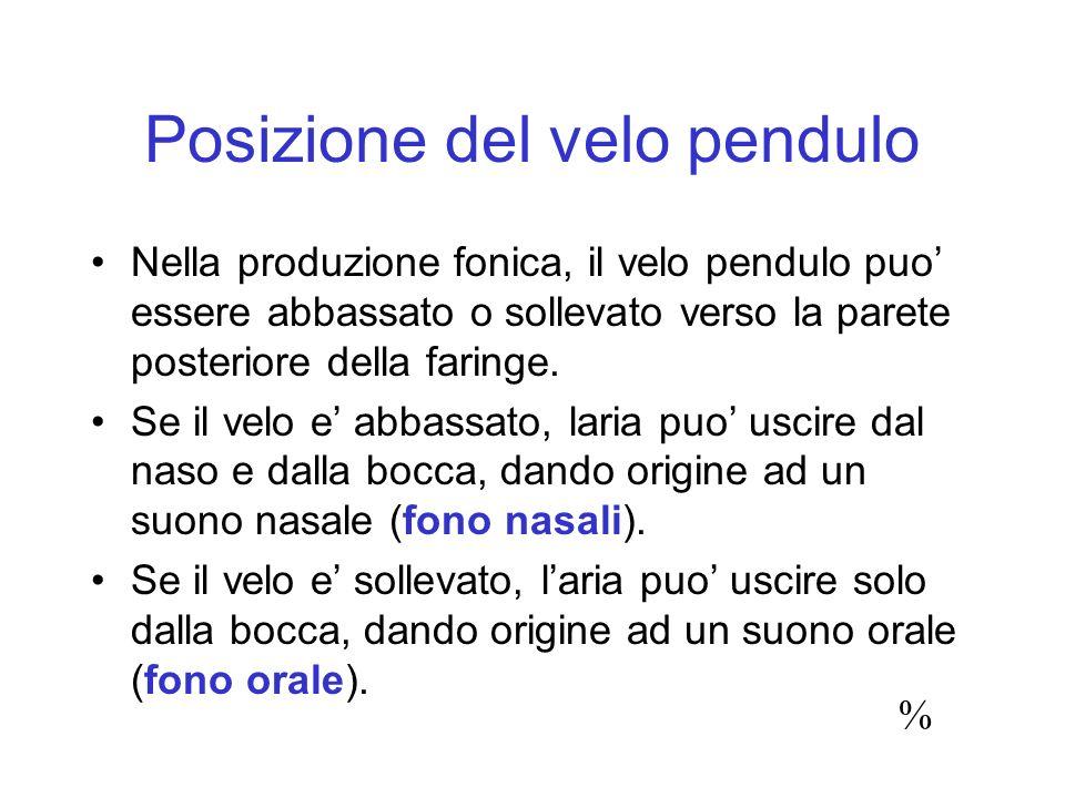 Posizione del velo pendulo Nella produzione fonica, il velo pendulo puo essere abbassato o sollevato verso la parete posteriore della faringe. Se il v