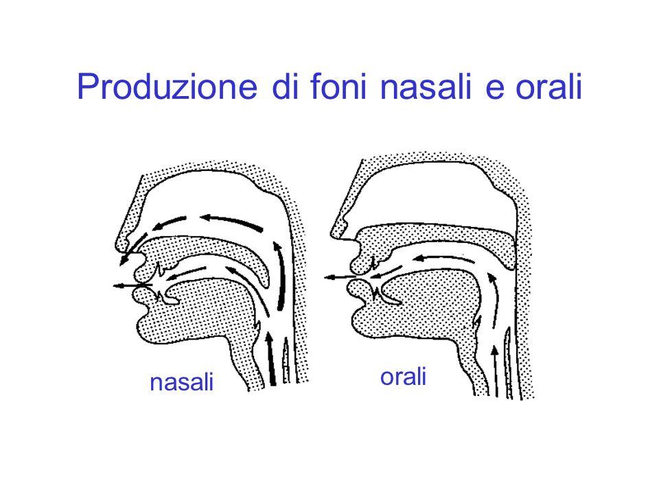 Produzione di foni nasali e orali nasali orali