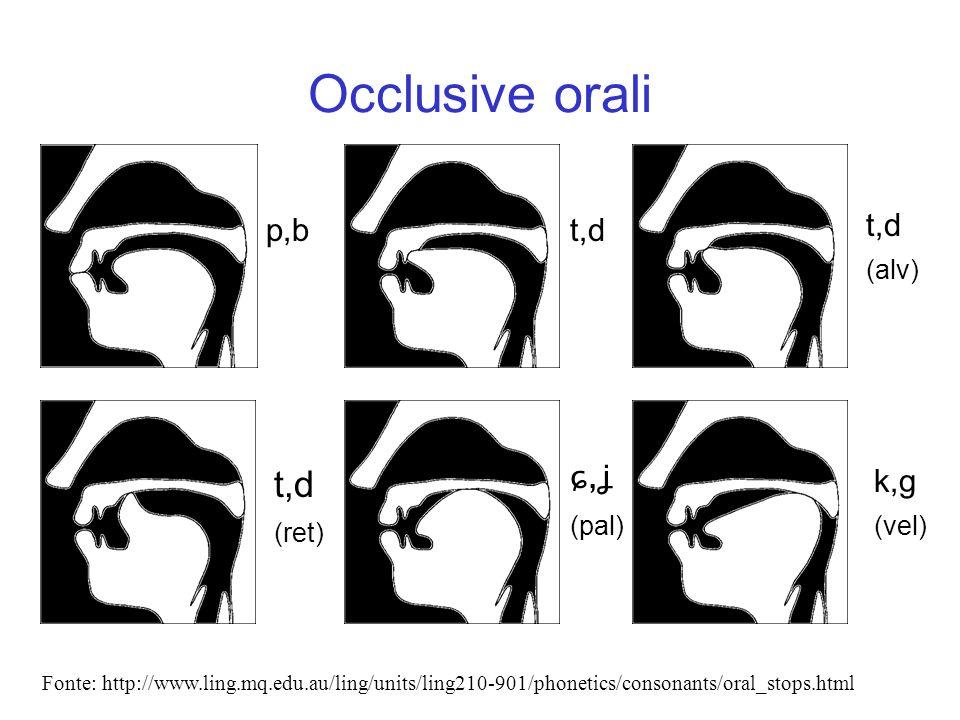 Occlusive orali p,bt,d ɕ,ʝ (pal) k,g (vel) t,d (ret) t,d (alv) Fonte: http://www.ling.mq.edu.au/ling/units/ling210-901/phonetics/consonants/oral_stops