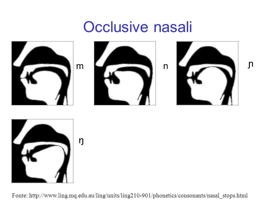 Occlusive nasali mn ɲ Fonte: http://www.ling.mq.edu.au/ling/units/ling210-901/phonetics/consonants/nasal_stops.html ŋ