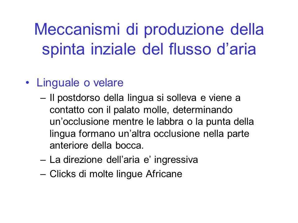 Meccanismi di produzione della spinta inziale del flusso daria Linguale o velare –Il postdorso della lingua si solleva e viene a contatto con il palat