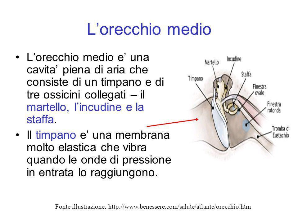 Lorecchio medio Lorecchio medio e una cavita piena di aria che consiste di un timpano e di tre ossicini collegati – il martello, lincudine e la staffa