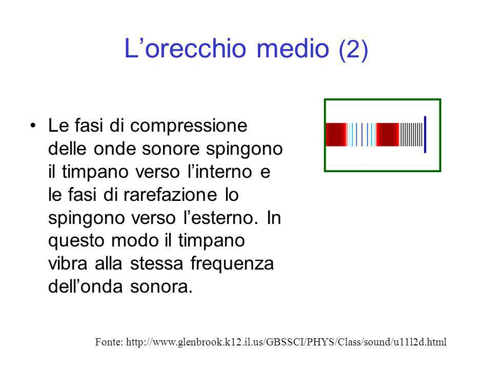 Lorecchio medio (3) Poiche il timpano e collegato al martello, allincudine e alla staffa, i movimenti del timpano li metteranno in movimento alla stessa frequenza dellonda sonora.