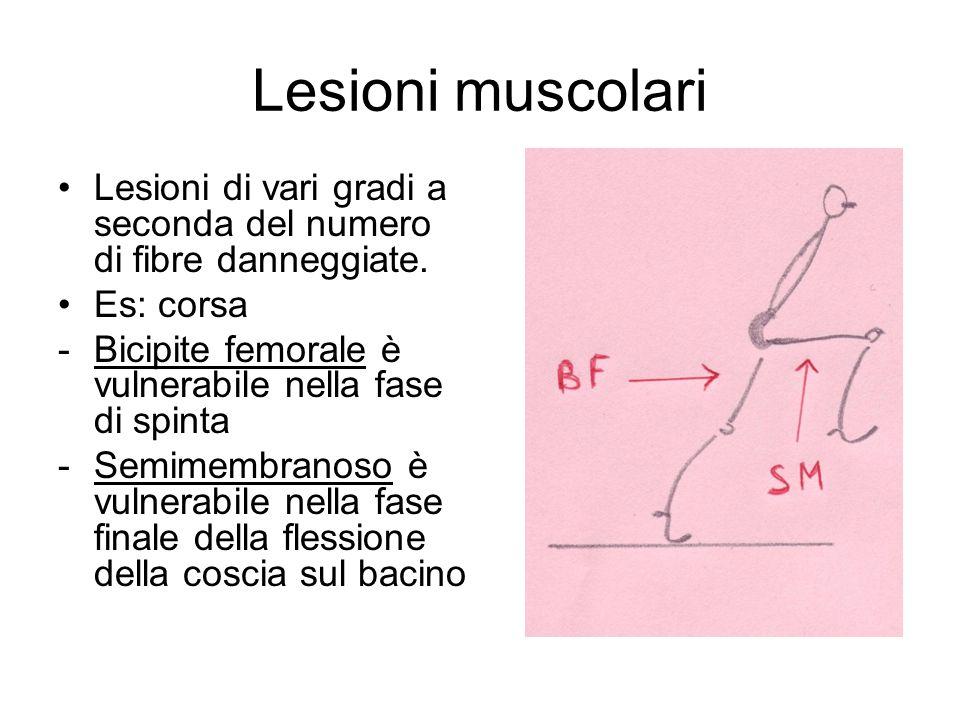 Lesioni muscolari Lesioni di vari gradi a seconda del numero di fibre danneggiate. Es: corsa -Bicipite femorale è vulnerabile nella fase di spinta -Se