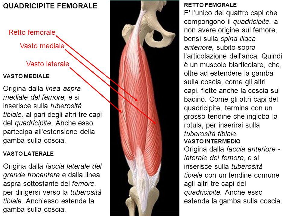QUADRICIPITE FEMORALE Vasto mediale Vasto laterale Retto femorale RETTO FEMORALE E l unico dei quattro capi che compongono il quadricipite, a non avere origine sul femore, bensì sulla spina iliaca anteriore, subito sopra l articolazione dell anca.