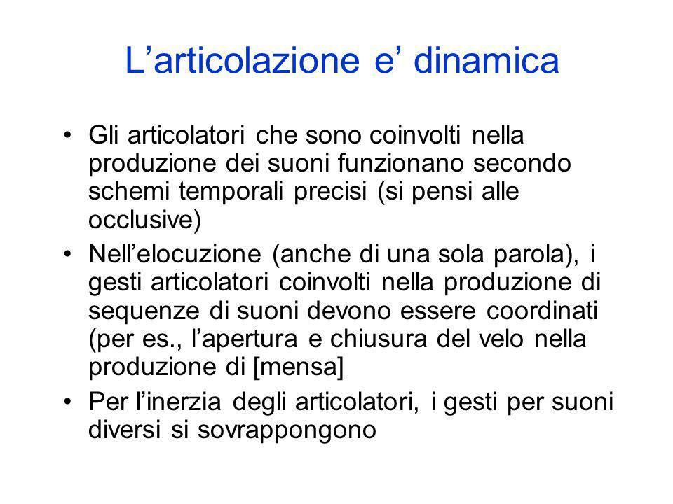 Larticolazione e dinamica Gli articolatori che sono coinvolti nella produzione dei suoni funzionano secondo schemi temporali precisi (si pensi alle oc
