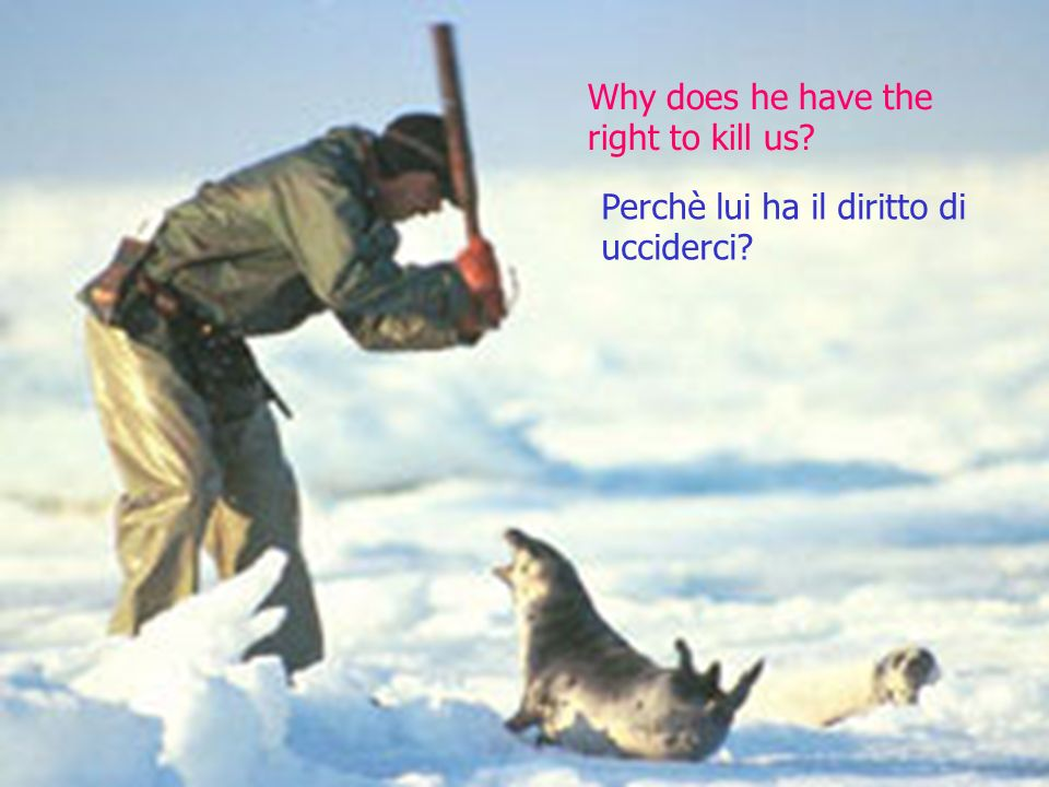 Why does he have the right to kill us? Perchè lui ha il diritto di ucciderci?