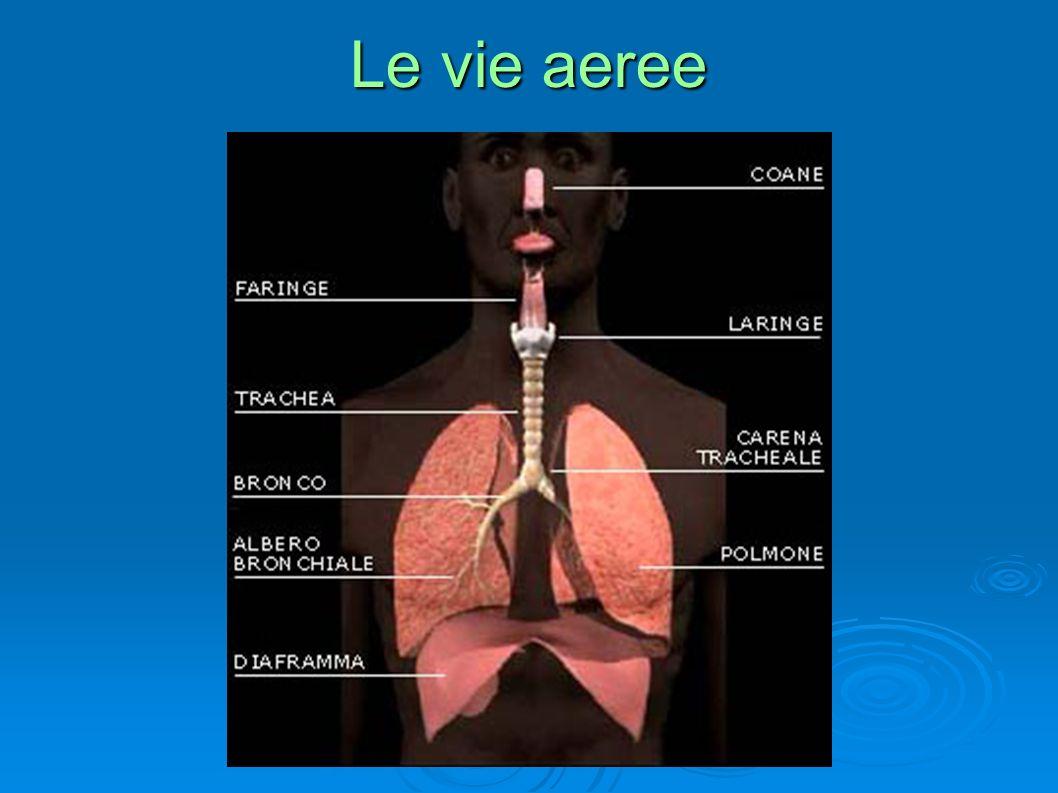 Come si vedono i polmoni